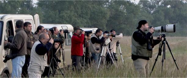 fotografia-ornitologica-doñana-002